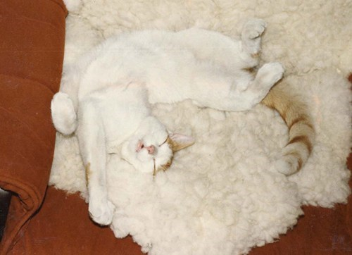 """Let Sleeping Cats Do The Twist."""
