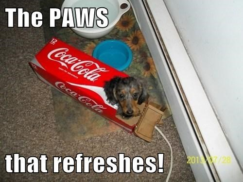 The PAWS  that refreshes!