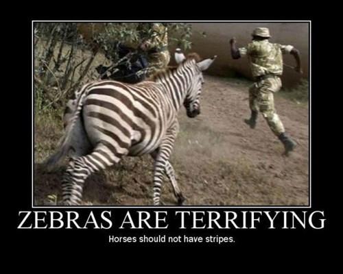 zebra,scary,run,funny,animals