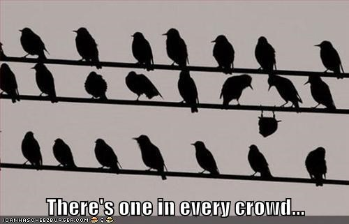 There's one in every crowd...