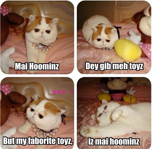 Hoomins Make Bestest Toyz