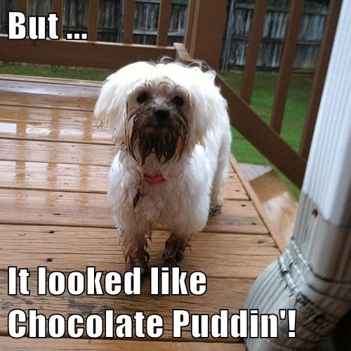 But ...   It looked like Chocolate Puddin'!