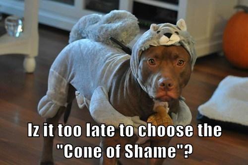 humiliation,costume,squirrel,funny