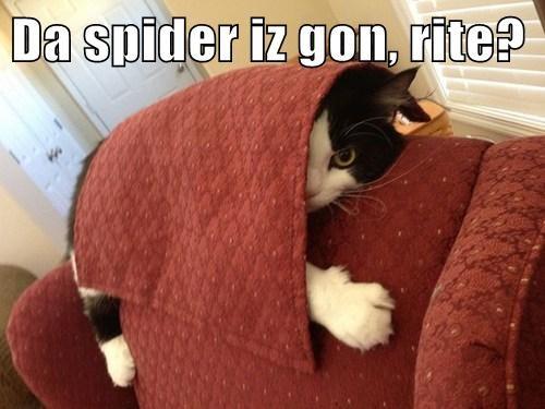 Da spider iz gon, rite?