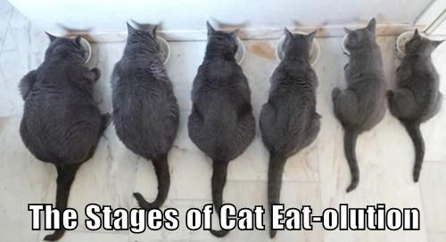 The Stages of Cat Eat-olution