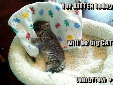 Yor KITTEN today will be big CAT tomorrow ♥