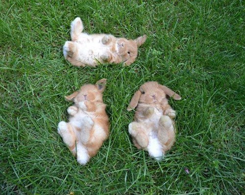 bunnies,little