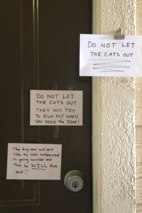 run away,sneaky,Cats,funny