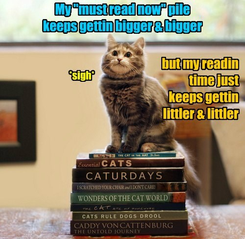LOLCat has a stack of reading already