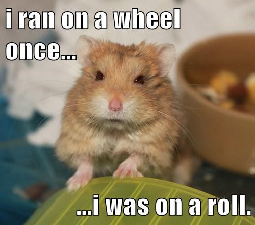Hamsters Are Oh So Punny