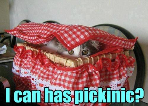 picnic,surprise,funny