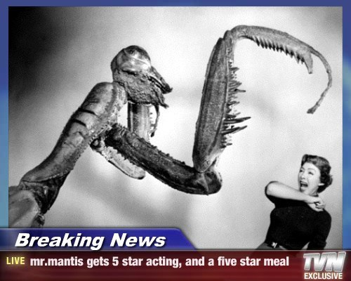 Breaking News - mr.mantis gets 5 star acting, and a five star meal
