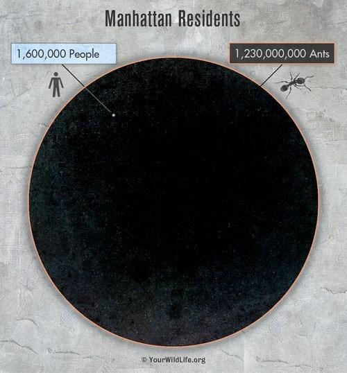 manhattan,population,ants
