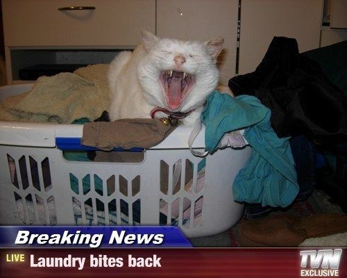Breaking News - Laundry bites back