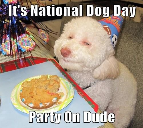 It's National Dog Day  Party On Dude