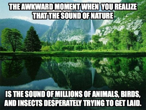 The Actual Sounds of Nature