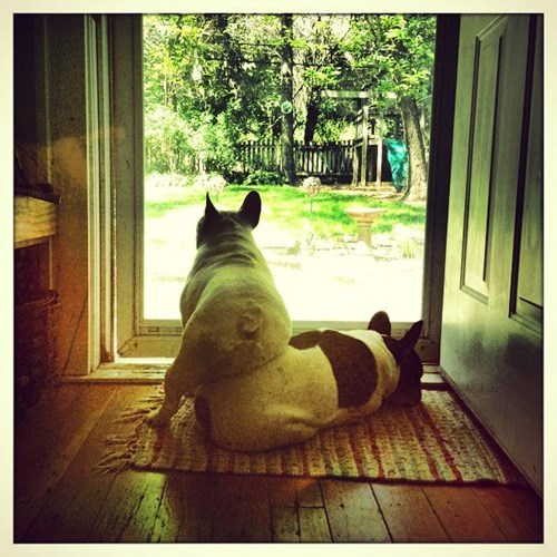 friends,french bulldogs