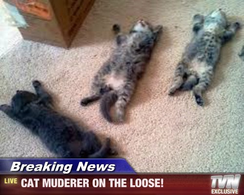 Breaking News - CAT MUDERER ON THE LOOSE!