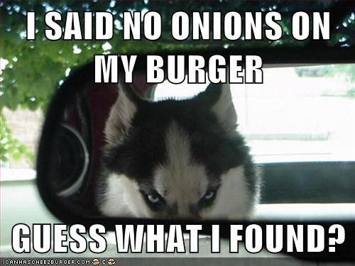 dogs,onions,driving