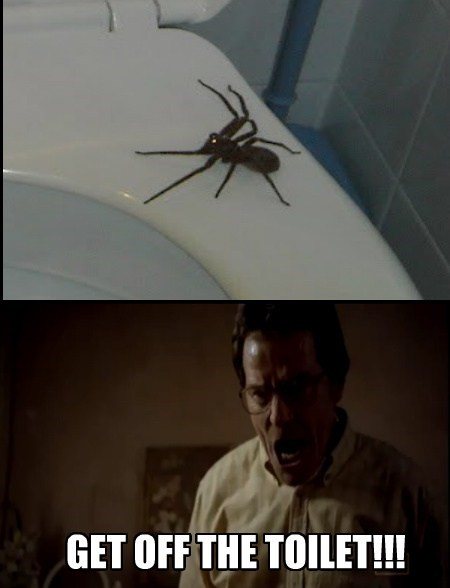 spiders,scary,breaking bad,funny