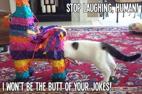 butt,jokes,pun,laughing