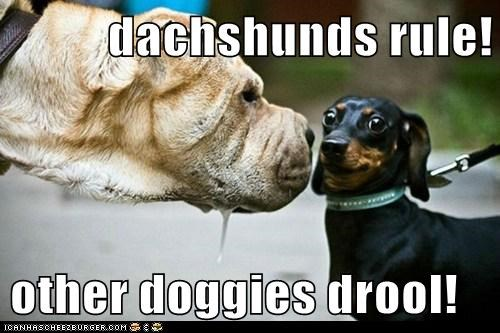 dachshunds rule!  other doggies drool!