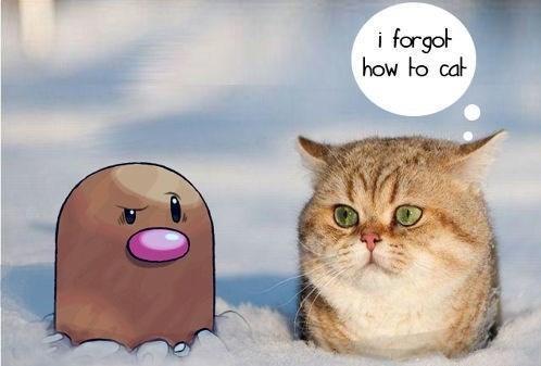 Diglett Wednesday: A Cat Influenced by Diglett