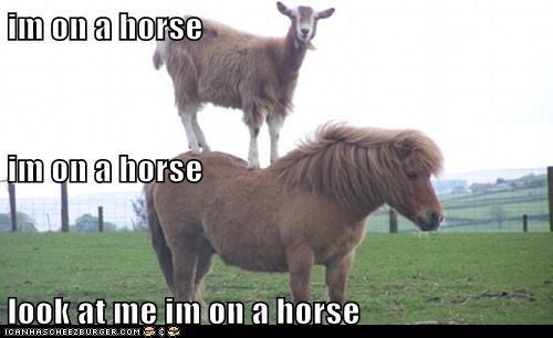 goat,horse