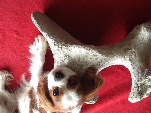 Dog Bone Lottery Winner