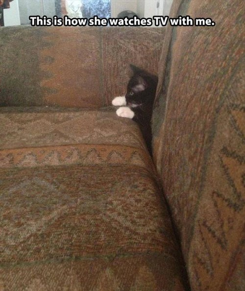 couch,kitten