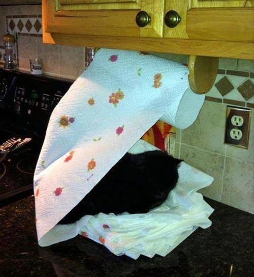 bed,paper towels