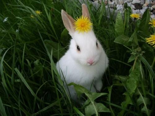 Bunday,Flower,bunny