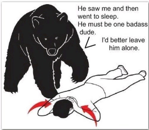 Why Bears Leave You Alone When You Play Dead
