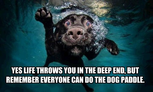 YES LIFE THROWS YOU IN THE DEEP END, BUT REMEMBER EVERYONE CAN DO THE DOG PADDLE.