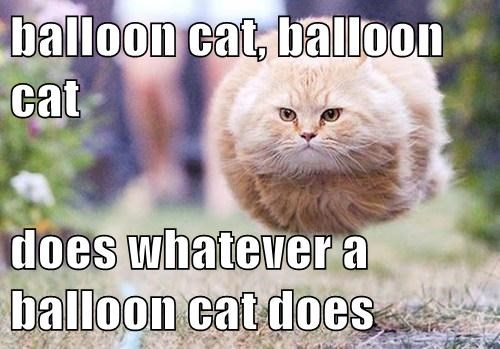 balloon cat, balloon cat  does whatever a balloon cat does