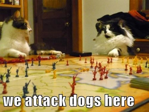 we attack dogs here