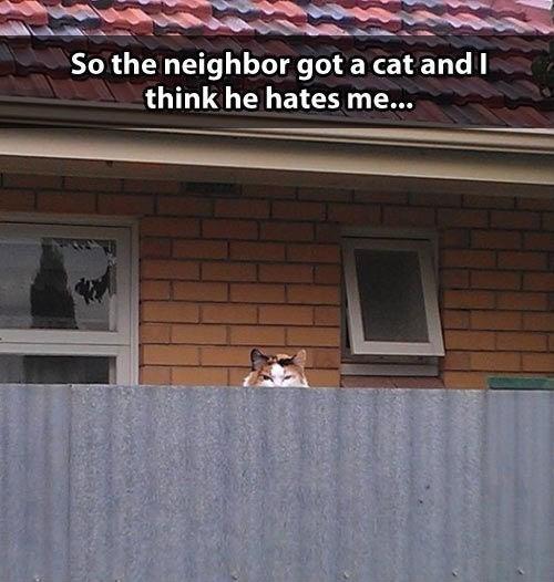neighbors,Cats