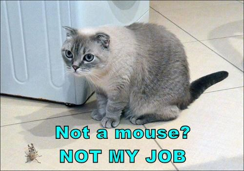 Not a mouse?           NOT MY JOB