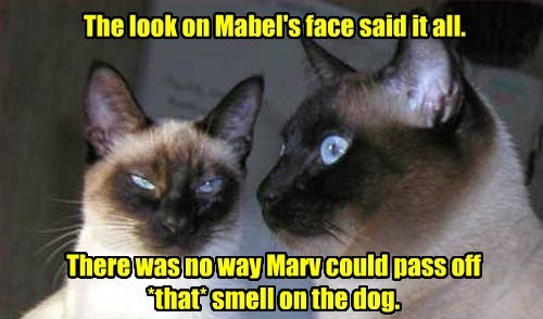 The look on Mabel's face said it all.