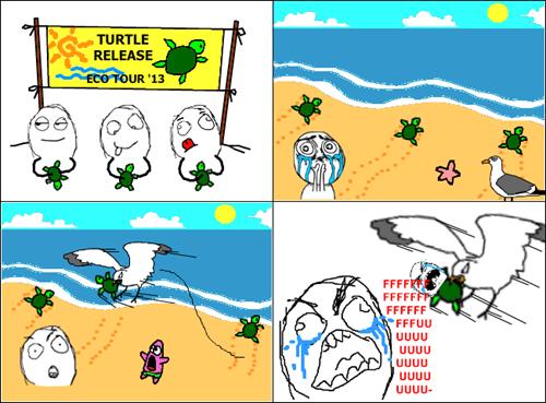 nature,turtles,seagulls,the beach