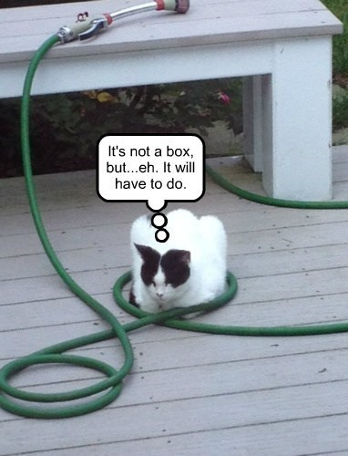 cat,wet,sleeping,hose