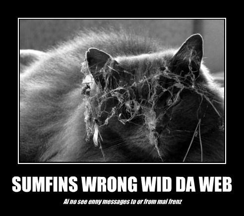 SUMFINS WRONG WID DA WEB