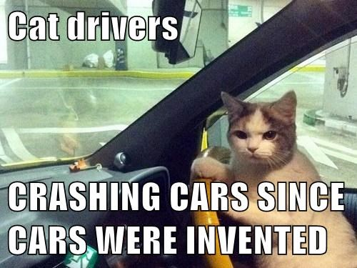 Cat drivers  CRASHING CARS SINCE CARS WERE INVENTED