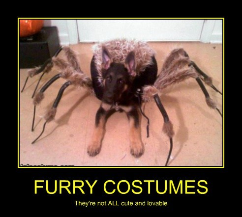 wtf,spider,costume,funny,furry