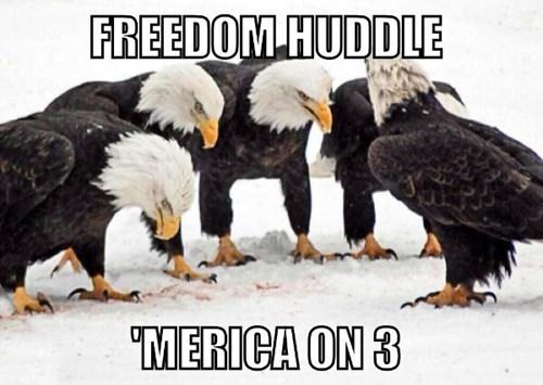 merica,bald eagles,image macro,americana