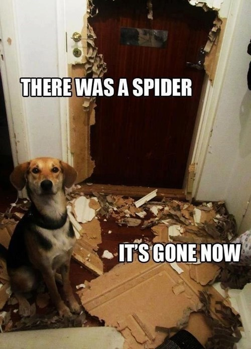 Dog Destroys Spider and Everything Else