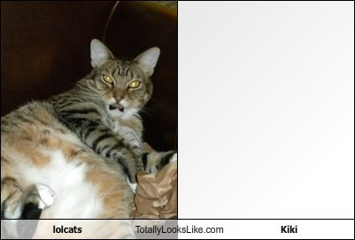 lolcats Totally Looks Like Kiki