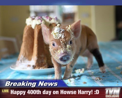 Breaking News - Happy 400th day on Howse Harry! :D