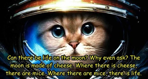 Can there be life on the moon? Why even ask? The moon is made of cheese. Where there is cheese, there are mice. Where there are mice, there is life.