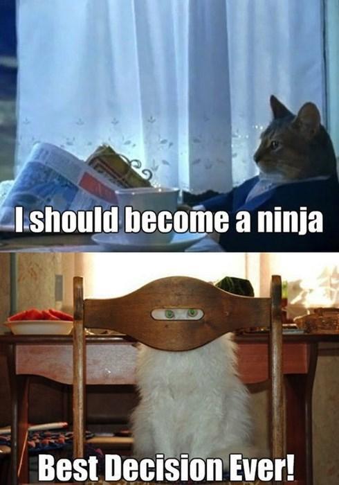 ninjas,Cats,animals